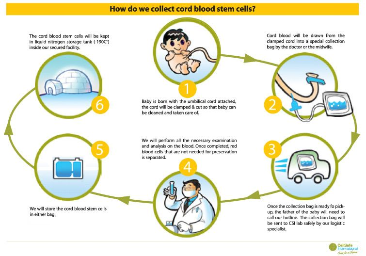 Cord-Blood-Banking (1)