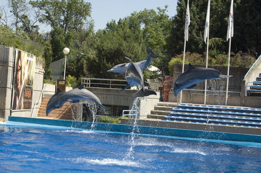 espectaculo-delfines-zoo-madrid