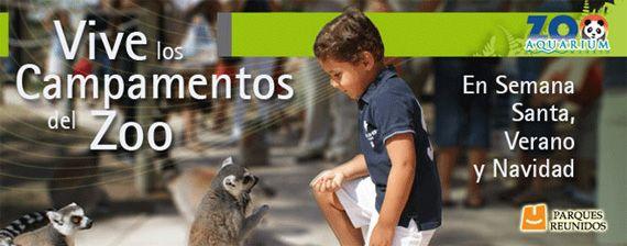 zoo madrid cartel campamento