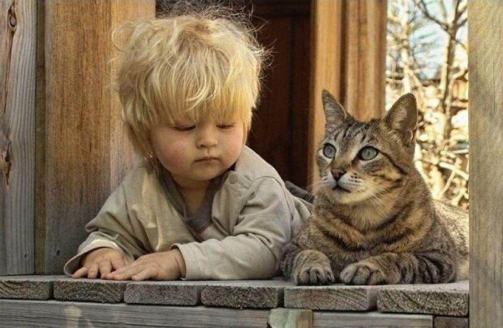 bebes y mascotas niño con gato