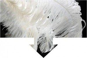 flecha pluma