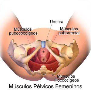 pubococcígeo