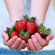 alimentos fresas