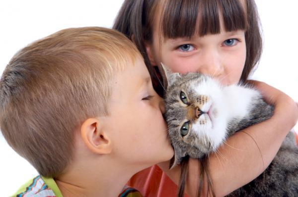 nenes gato