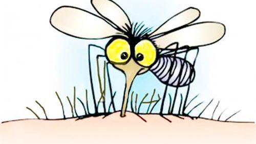 un-encanto-de-mosquitos