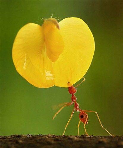 picadura insecto hormiga roja