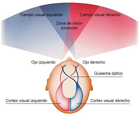 revision oftalmológica Binocularidad